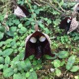 神代植物公園のガイドツアーで不思議な植物に出会う