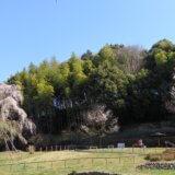 「からきだの道」から「長池公園」へ春風に吹かれて