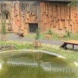 多摩動物公園のライオン園は準備中・練習中