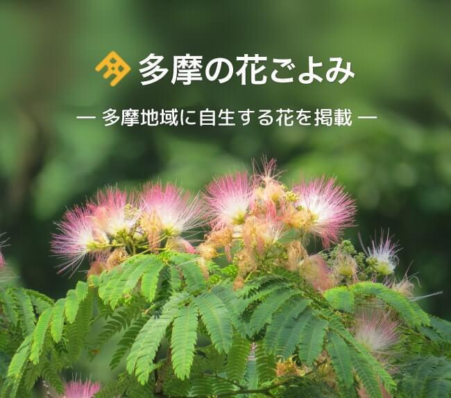多摩の花ごよみ