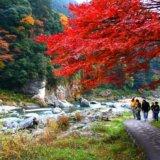 「紅葉の御岳渓谷自然観察会」の参加者募集 <br> 11月17日、多摩めぐりの会スタッフがガイド