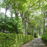 第15回多摩めぐり~多摩を深める <br>  東久留米市~築180年余の村野家住宅(顧想園)と名木、黒目川、遺跡を訪ねる